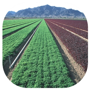 university of colorado yuma irrigation field